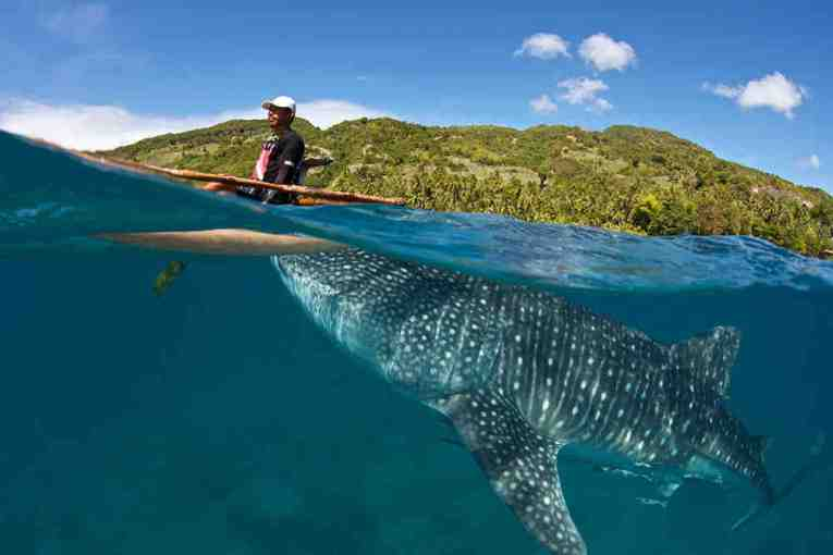 World famous whale shark tour at Oslob