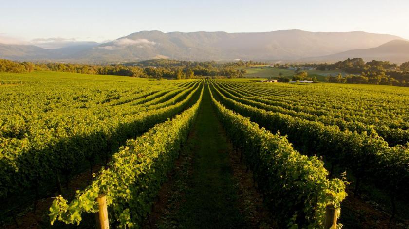 Margaret River Vineyards Farm