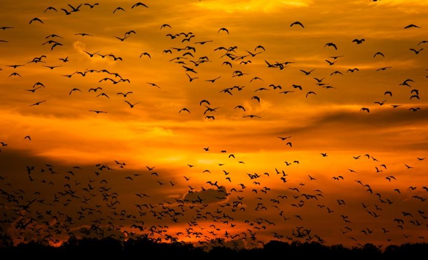 Kakadu National Park - Birds