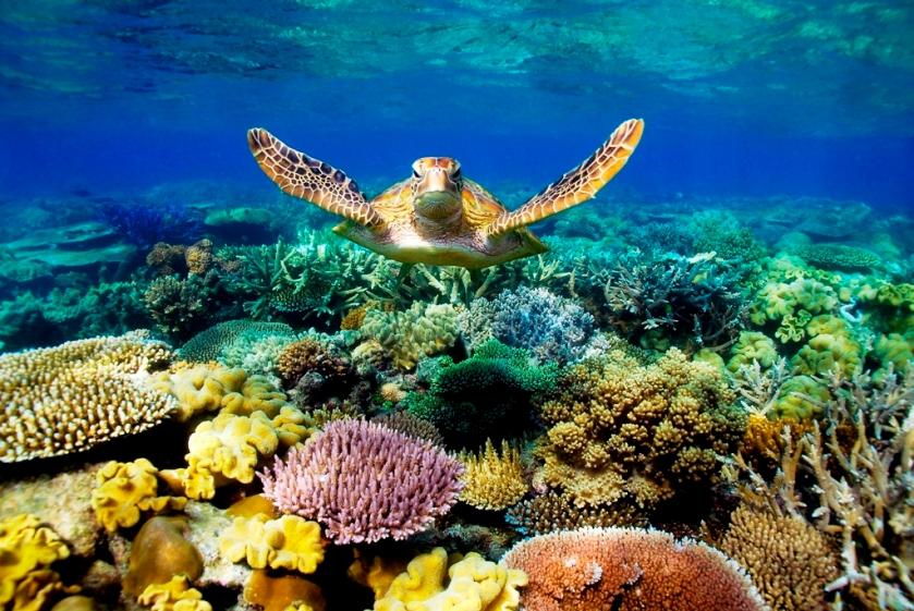 Australia - Great Barrier Reefs Photo