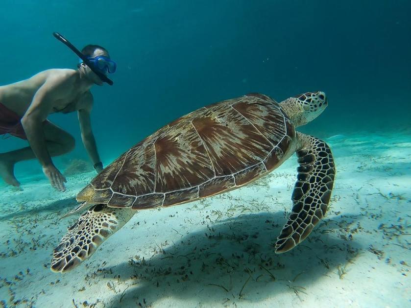 Port Barton - @dan_boshoff - Racing turtles